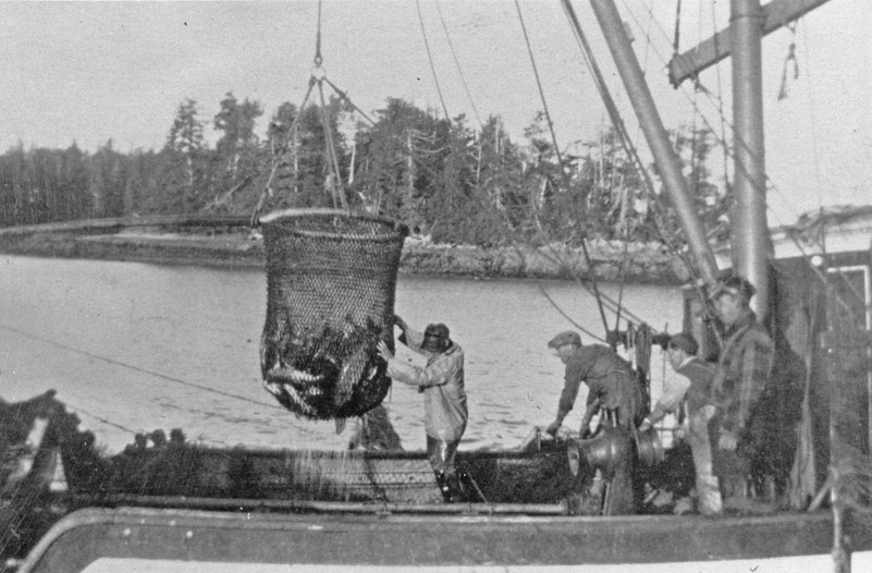 "A fisherman brailing salmon using a very similar style of dip net from the Ladner based fishing boat ""Klemtu."""