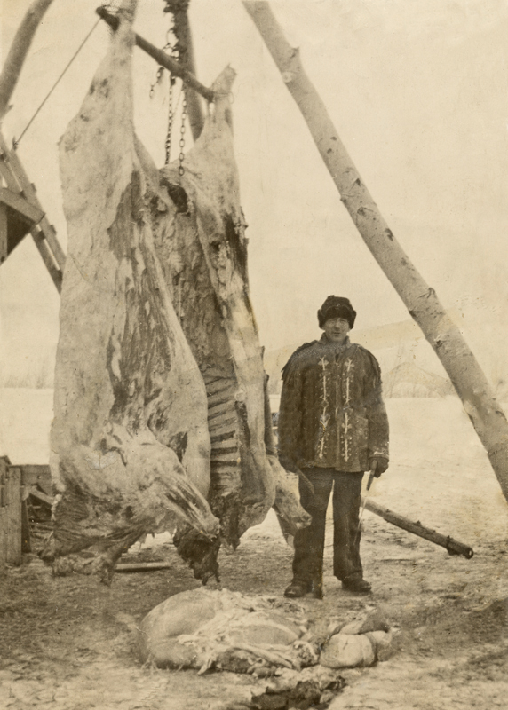 William Cowie Senior wearing his son's jacket and posing beside freshly butchered cattle.